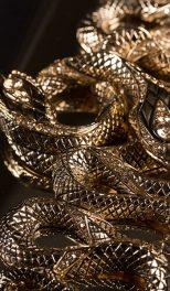 Golden-snake1